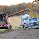 Grain trucks being filled with grains.