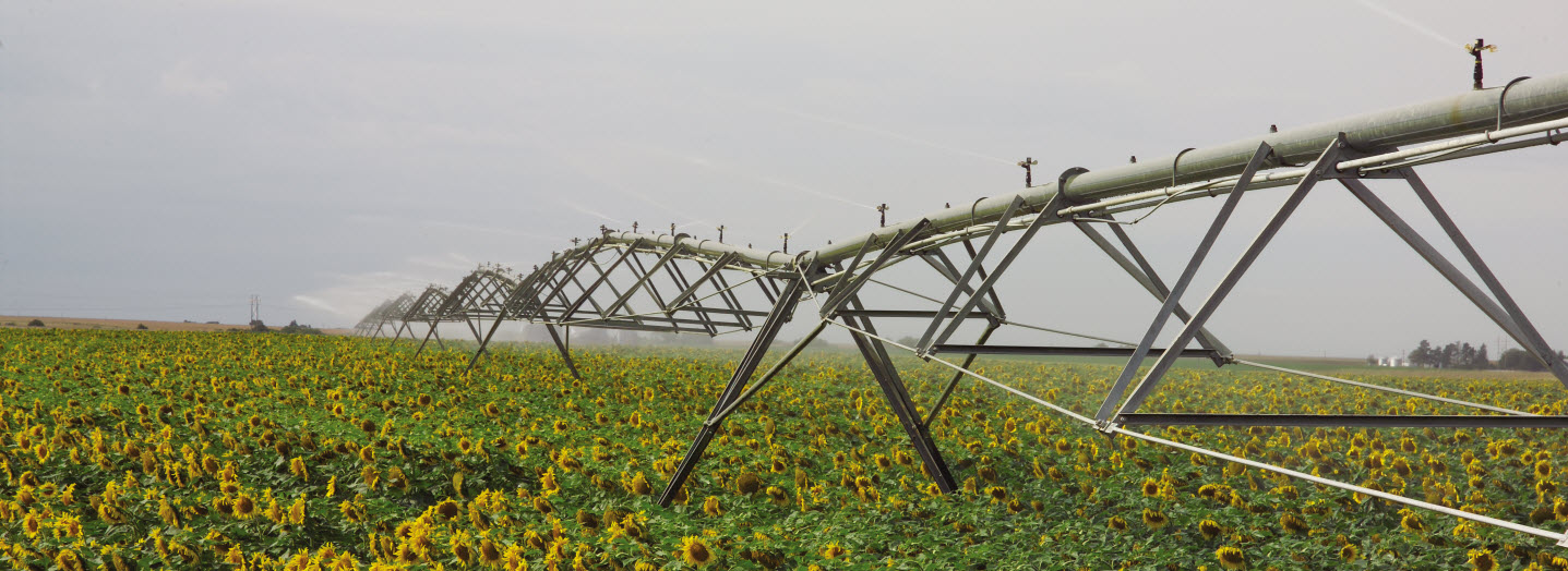 IRRIGATION,  energy-intensive part of farming, farm, crop, field, sunflower, flower, watering, spraying,