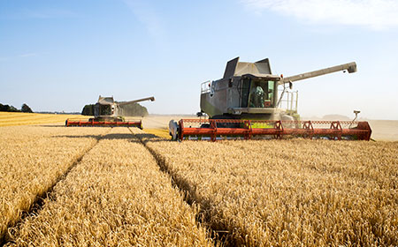 A tractor harvests grain in a field.
